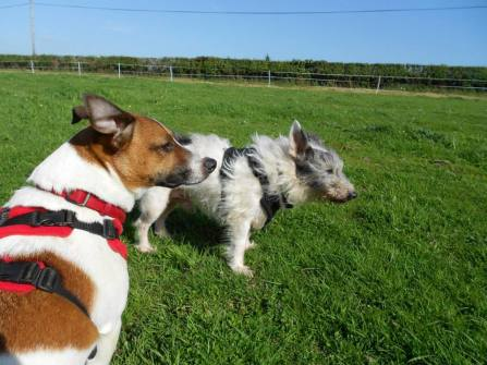 Diesel and Scruffy at the field