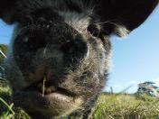 Wilber close up Sept 12